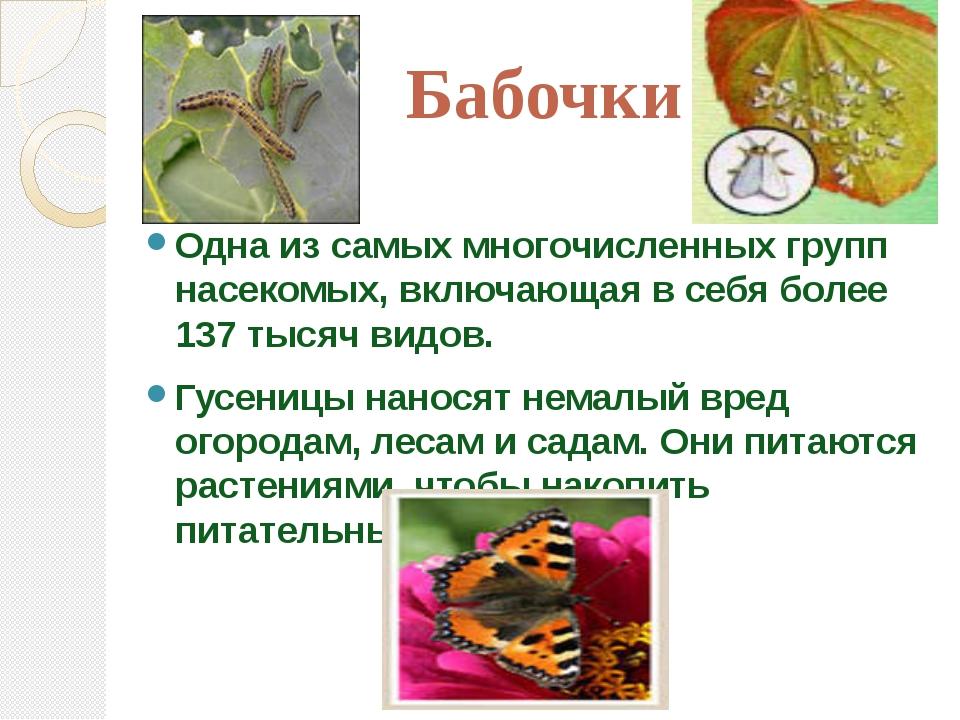 Бабочки Одна из самых многочисленных групп насекомых, включающая в себя более...