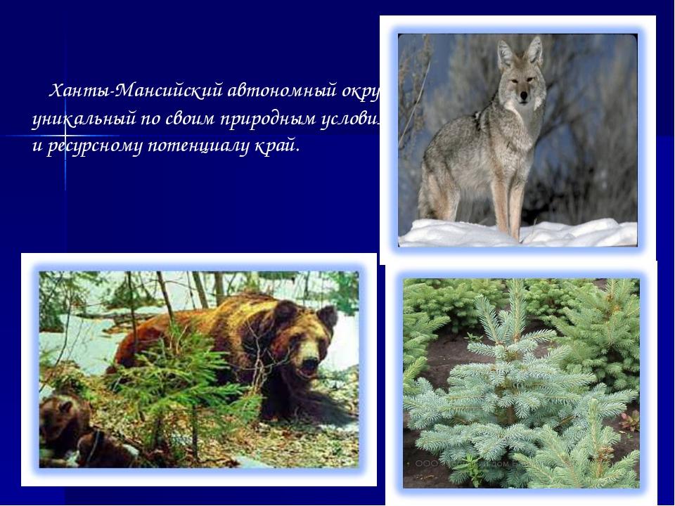 Ханты-Мансийский автономный округ – уникальный по своим природным условиям и...