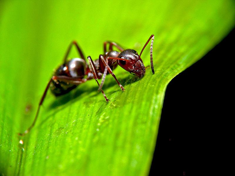 Картинки насекомые на телефон бесплатно - cкачать бесплатные картинки для сотовых, мобильных телефонов бесплатно, картинки на те