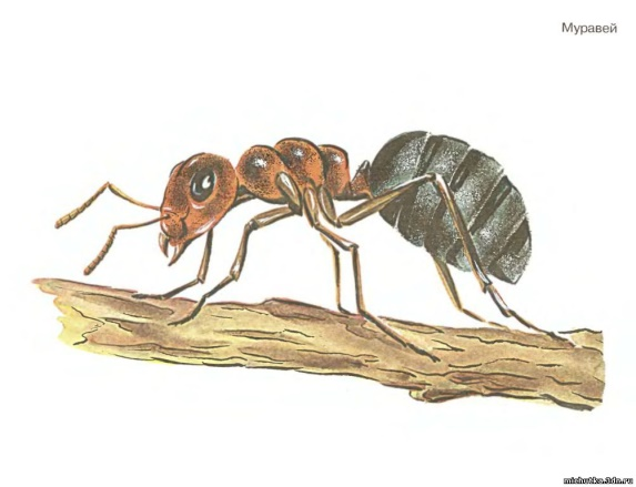 Скачать Картинки насекомых для детей 4