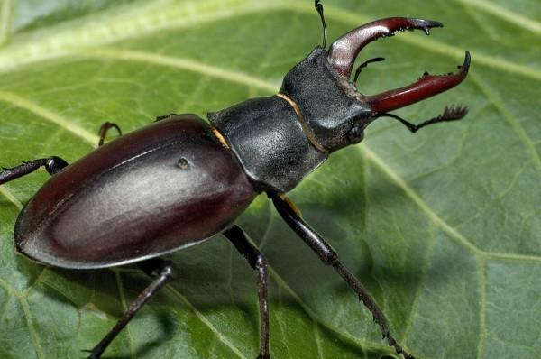 Особо личностный блог - Терпеть не могу насекомых!