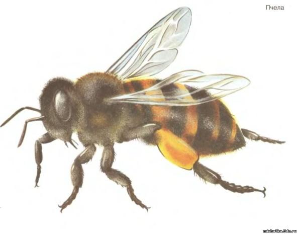 Скачать Картинки насекомых для детей 3