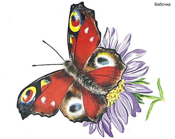 Иллюстрация 6 из 28 для Насекомые в картинках. Наглядное пособие для педагогов, логопедов, воспитателей и родителей Лабиринт - к