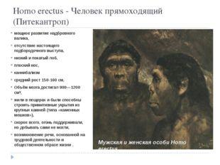 Homo erectus - Человек прямоходящий (Питекантроп) мощное развитие надбровног