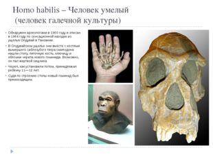 Homo habilis – Человек умелый  (человек галечной культуры) Обнаружен археоло