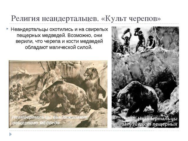 Религия неандертальцев. «Культ черепов» Неандертальцы охотились и на свирепы...