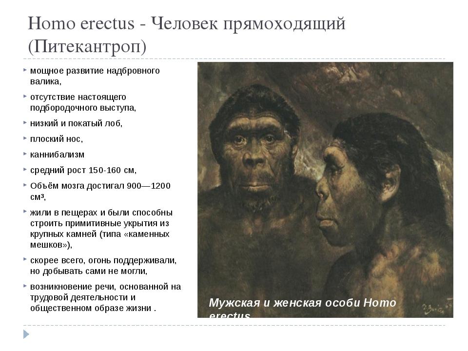 Homo erectus - Человек прямоходящий (Питекантроп) мощное развитие надбровног...