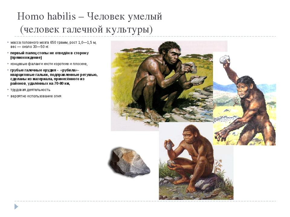 Homo habilis – Человек умелый  (человек галечной культуры) масса головного м...