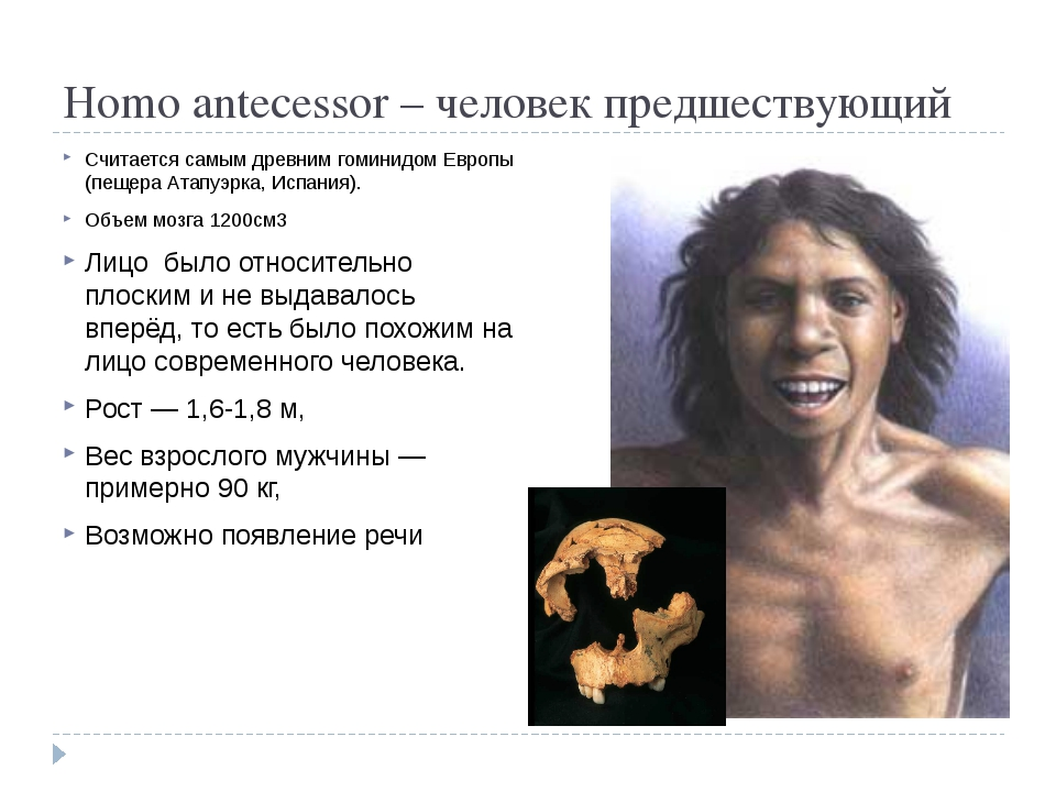 Homo antecessor – человек предшествующий Считается самым древним гоминидом Е...
