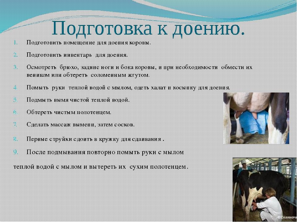 жаль правила машинного доения коров картинки признали волянского