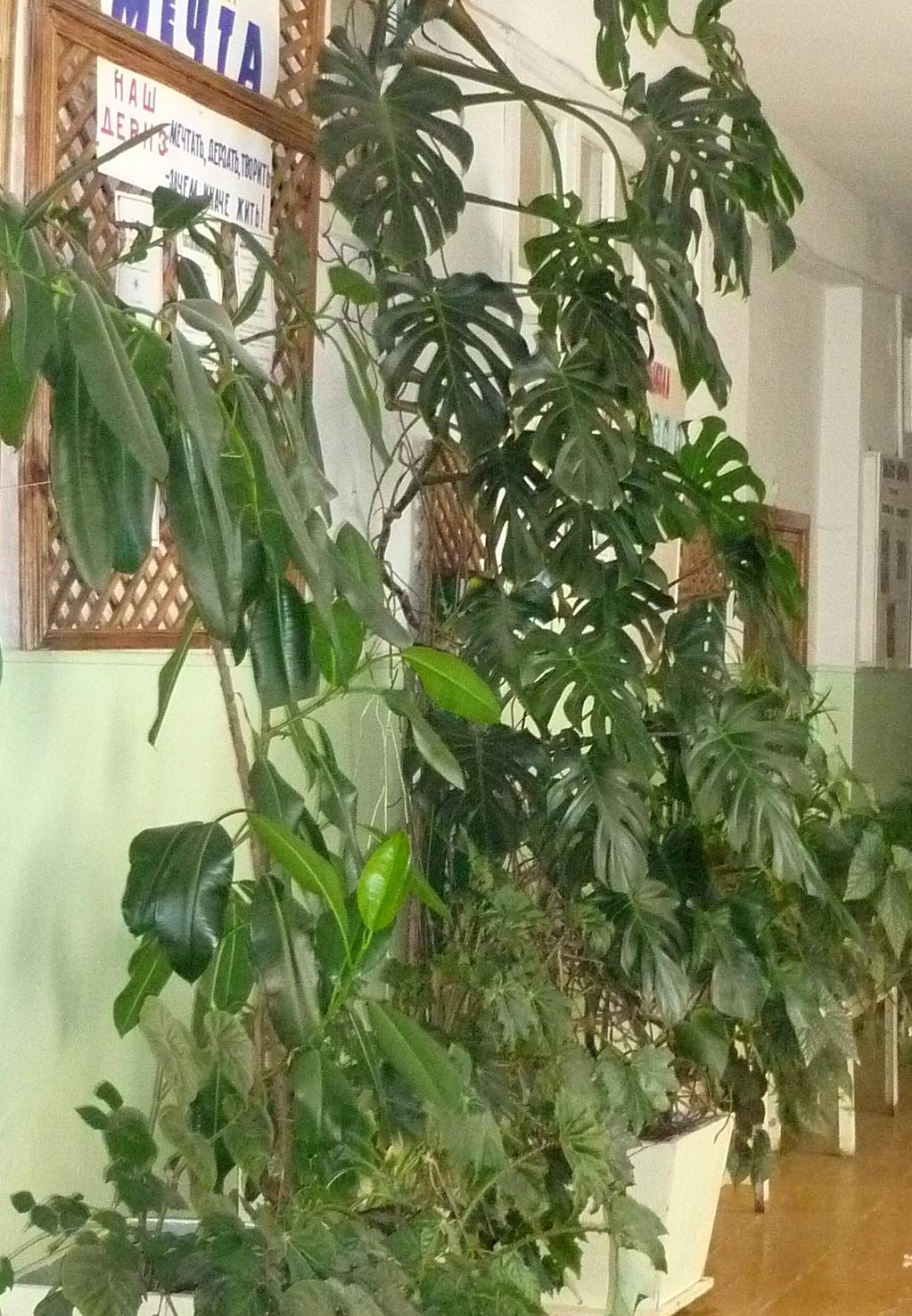Комнатные растения, вызывающие аллергию - домашние