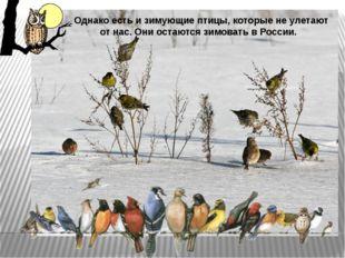 Однако есть и зимующие птицы, которые не улетают от нас. Они остаются зимоват