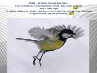 Зима – трудное время для птиц. С наступлением холодов птицам становиться очен
