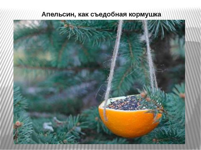 Апельсин, как съедобная кормушка