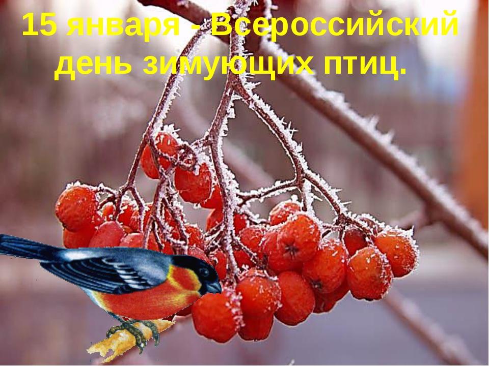 15 января - Всероссийский день зимующих птиц.
