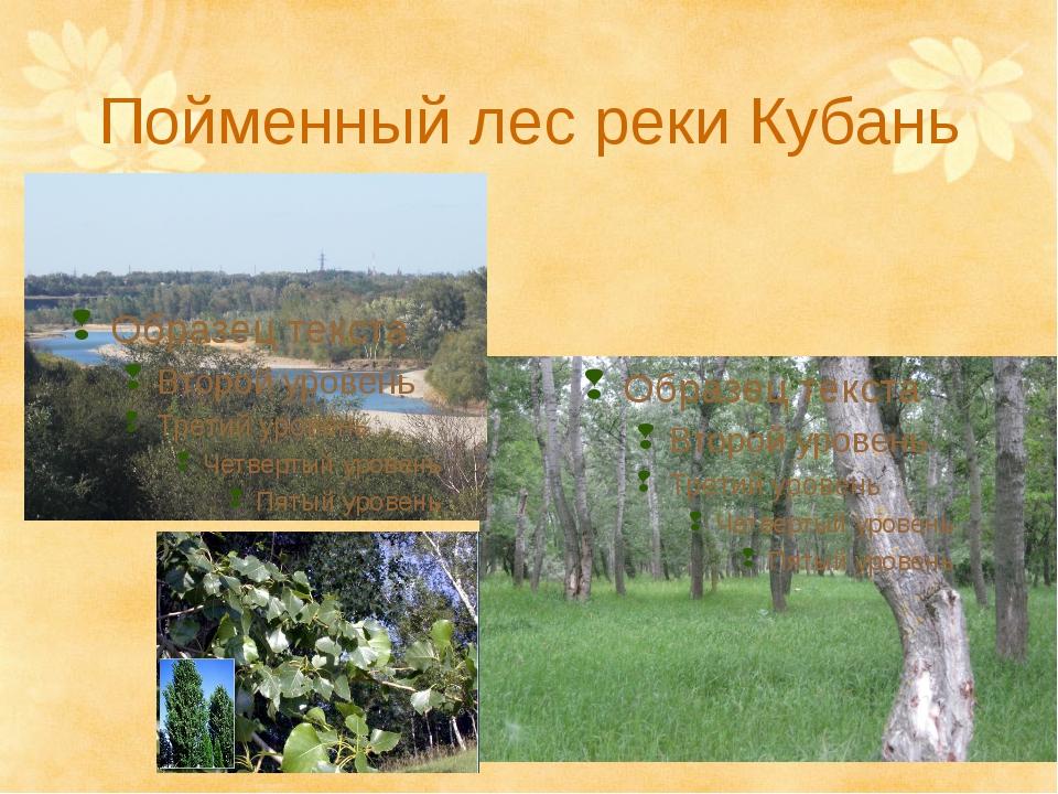 Пойменный лес реки Кубань