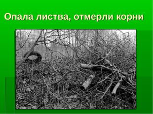 Опала листва, отмерли корни