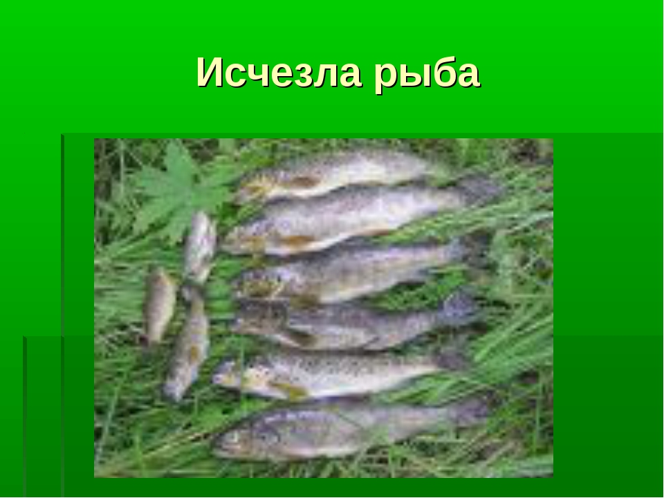 Исчезла рыба