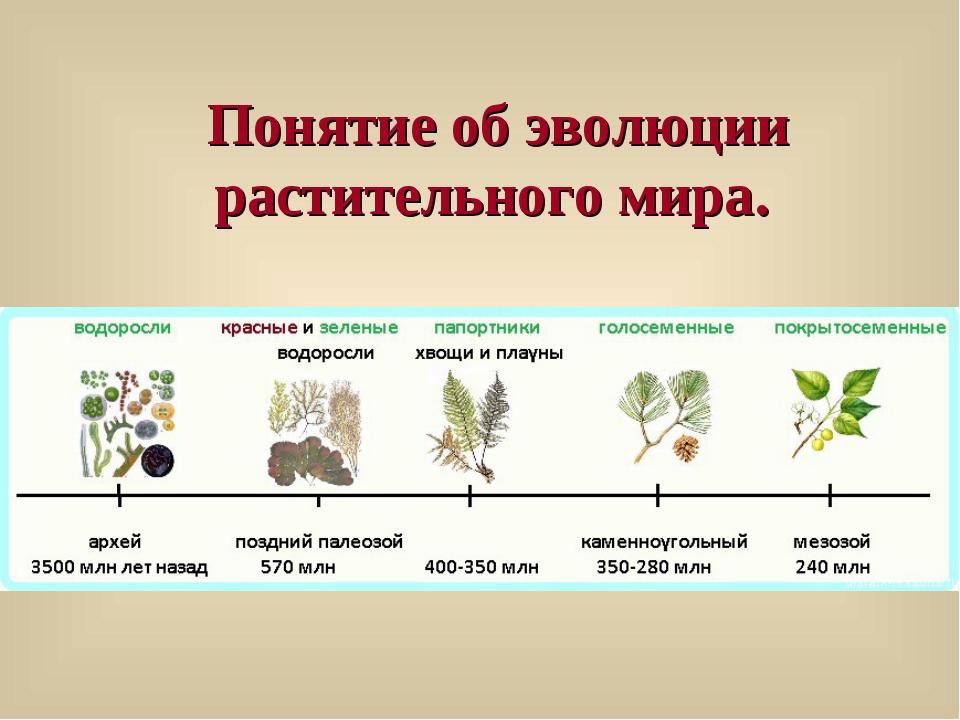 Понятие об эволюции растительного мира.
