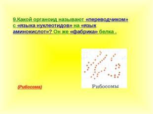 9.Какой органоид называют «переводчиком» с «языка нуклеотидов» на «язык амино