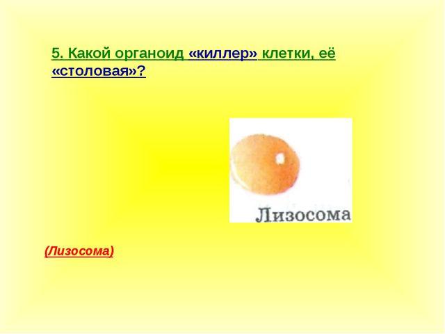 5. Какой органоид «киллер» клетки, её «столовая»? (Лизосома)