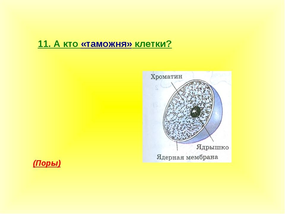 11. А кто «таможня» клетки? (Поры)