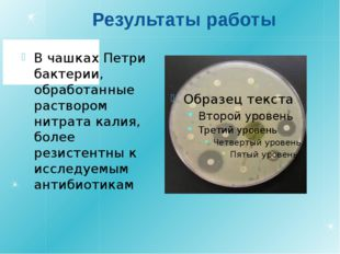 Результаты работы В чашках Петри бактерии, обработанные раствором нитрата кал