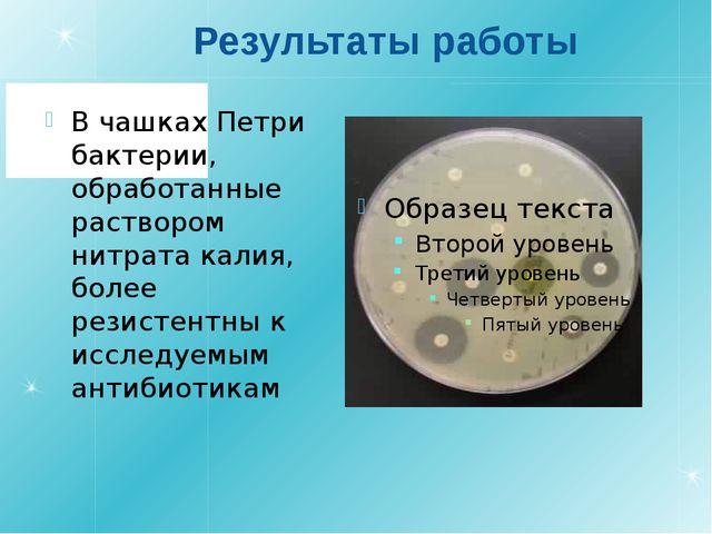 Результаты работы В чашках Петри бактерии, обработанные раствором нитрата кал...