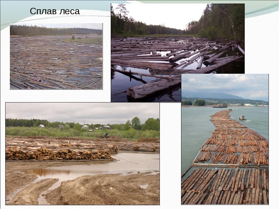 Сплав леса