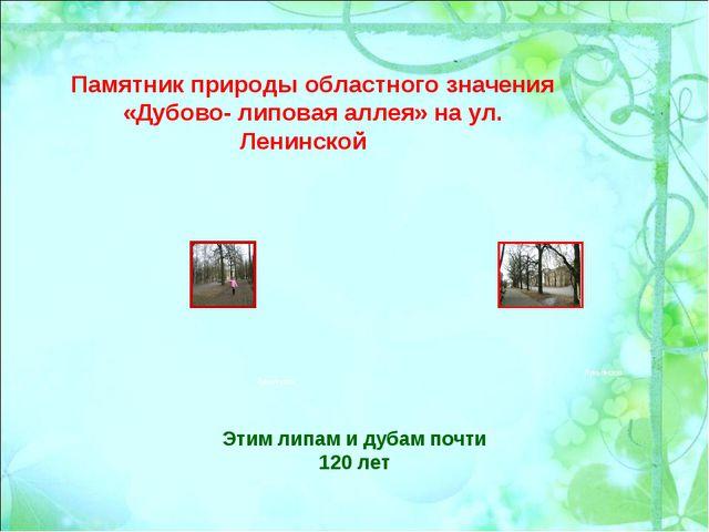 Памятник природы областного значения «Дубово- липовая аллея» на ул. Ленинской...