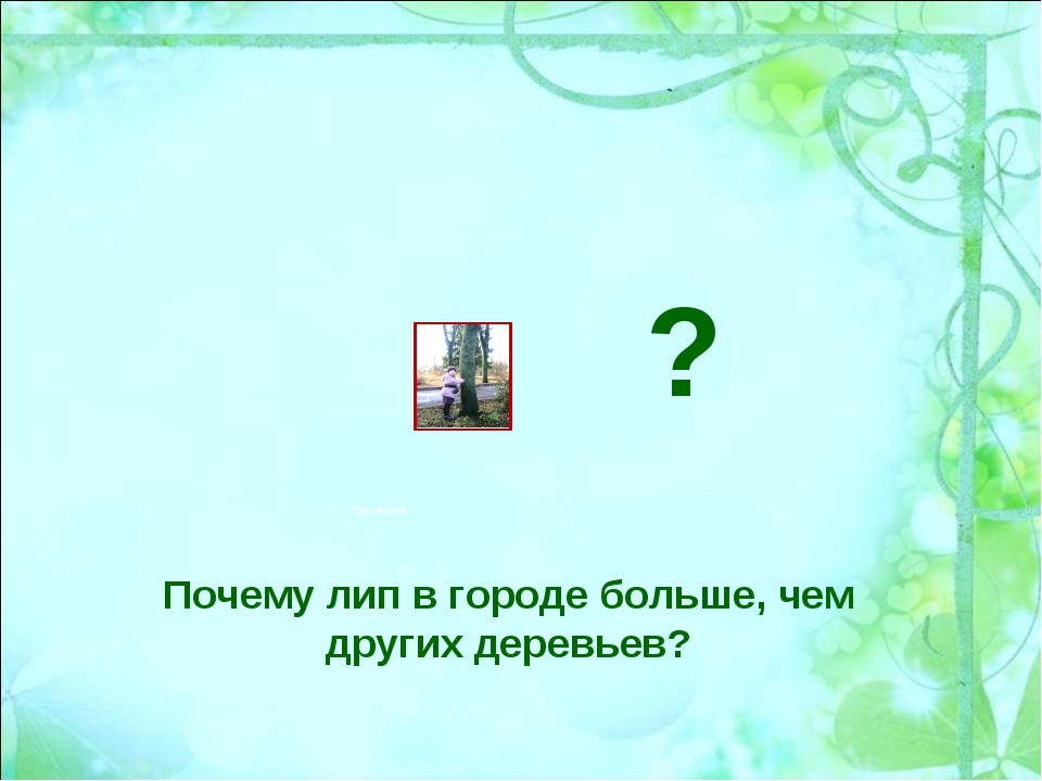 Почему лип в городе больше, чем других деревьев? ? Лукьянова