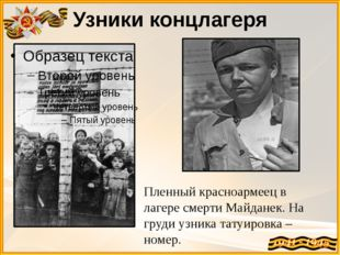 Узники концлагеря Пленный красноармеец в лагере смерти Майданек. На груди узн