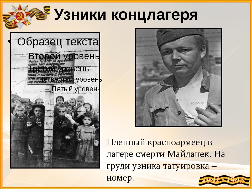 Узники концлагеря Пленный красноармеец в лагере смерти Майданек. На груди узн...