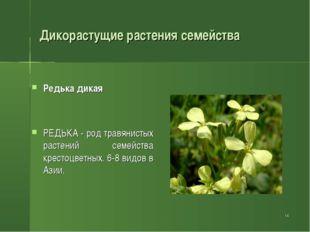 . * Дикорастущие растения семейства Редька дикая РЕДЬКА - род травянистых рас