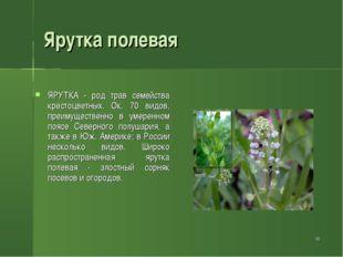 * Ярутка полевая ЯРУТКА - род трав семейства крестоцветных. Ок. 70 видов, пре