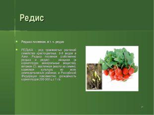 * Редис Редька посевная, в т. ч. редис РЕДЬКА - род травянистых растений семе