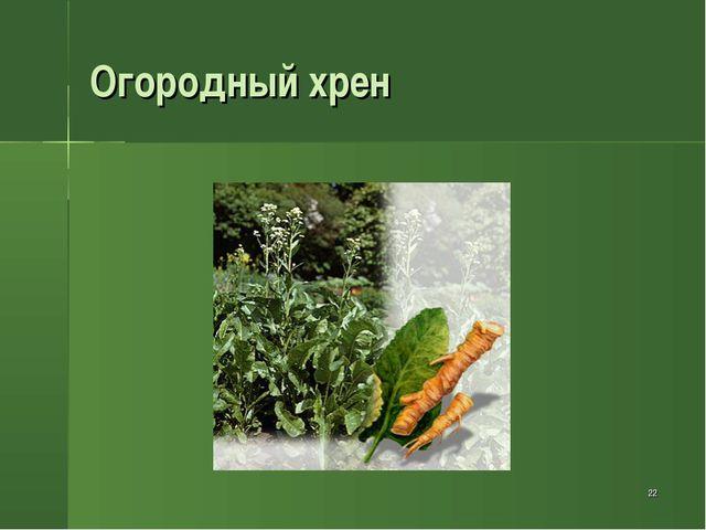 * Огородный хрен
