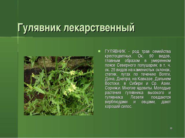 * Гулявник лекарственный ГУЛЯВНИК - род трав семейства крестоцветных. Ок. 90...
