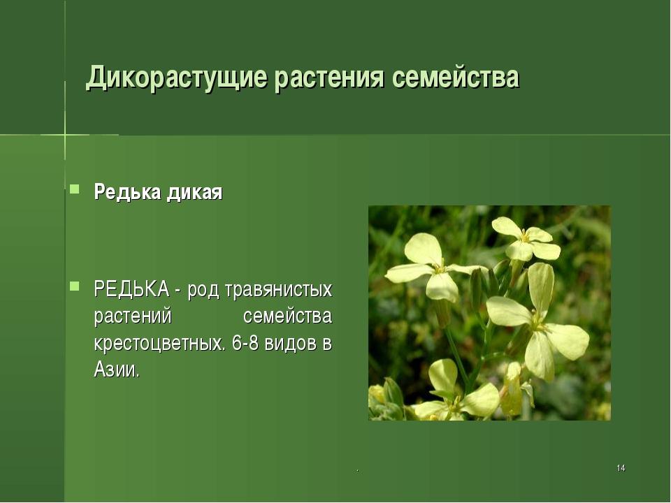 . * Дикорастущие растения семейства Редька дикая РЕДЬКА - род травянистых рас...