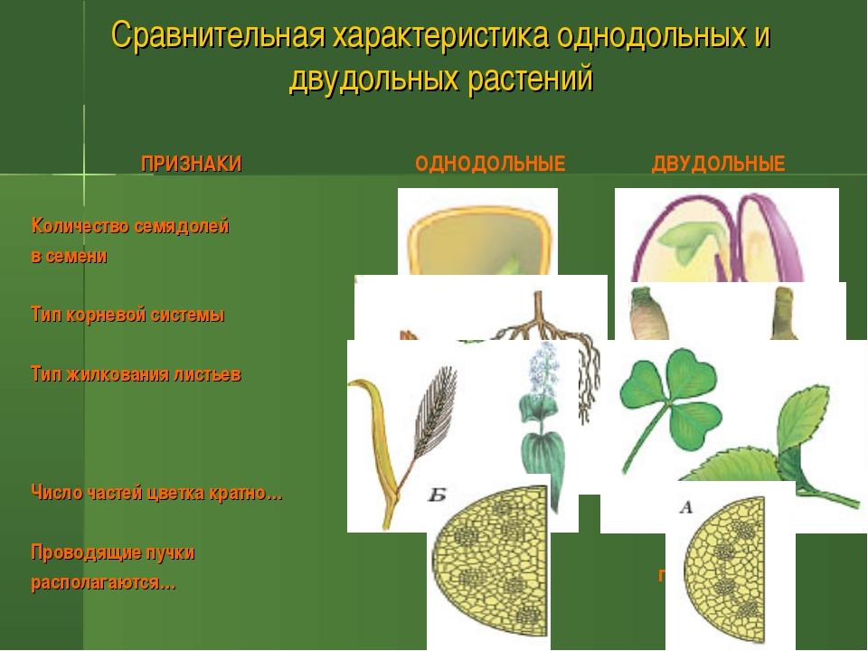 Сравнительная характеристика однодольных и двудольных растений ПРИЗНАКИ Колич...