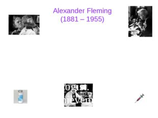 Alexander Fleming (1881 – 1955) Sir Alexander Fleming was a Scottish biolog