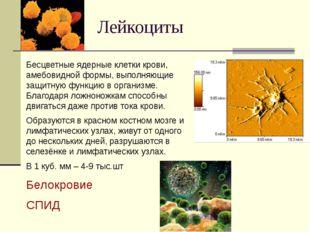 Лейкоциты Бесцветные ядерные клетки крови, амебовидной формы, выполняющие защ