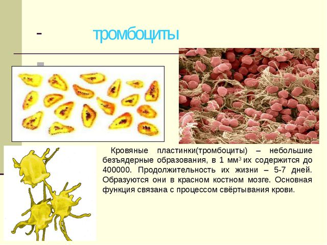 - - тромбоциты