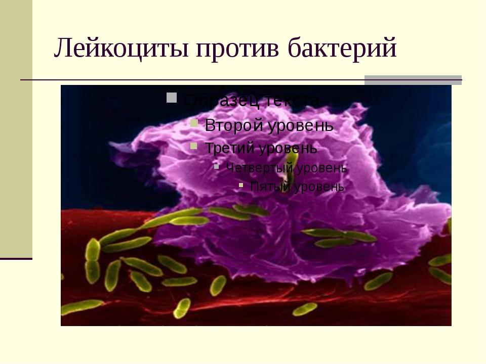 Лейкоциты против бактерий