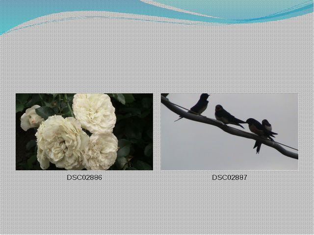 DSC02886 DSC02887