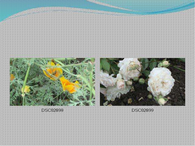 DSC02898 DSC02899