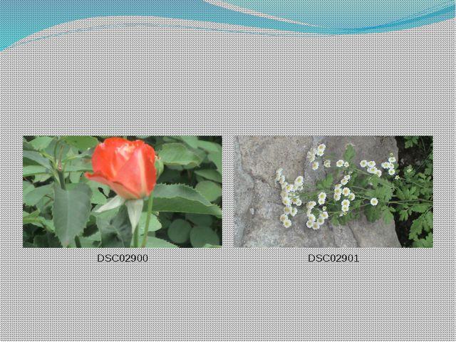 DSC02900 DSC02901