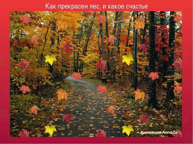 Как прекрасен лес, и какое счастье