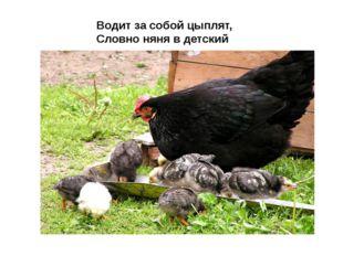 Водит за собой цыплят, Словно няня в детский сад.
