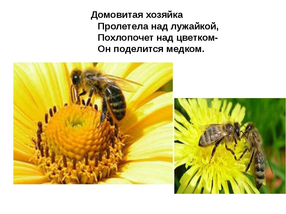 Домовитая хозяйка Пролетела над лужайкой, Похлопочет над цветком- Он поделит...